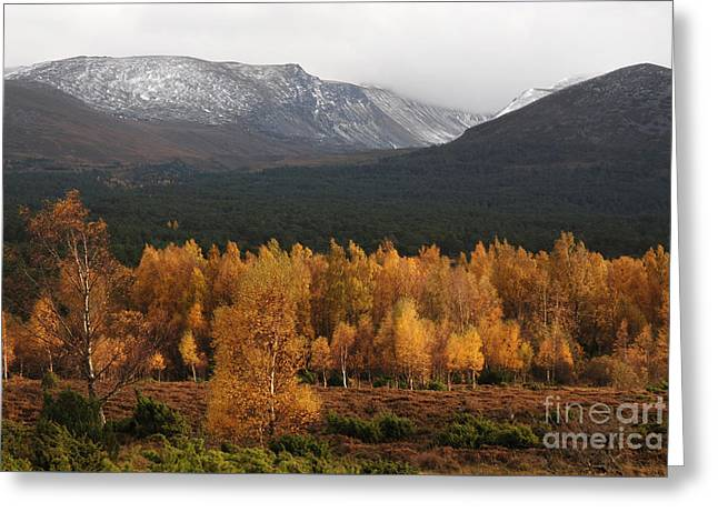 Golden Autumn - Cairngorm Mountains Greeting Card by Phil Banks
