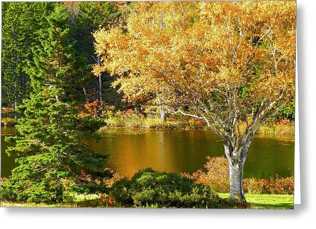 Greeting Card featuring the photograph Golden Autumn by Gene Cyr