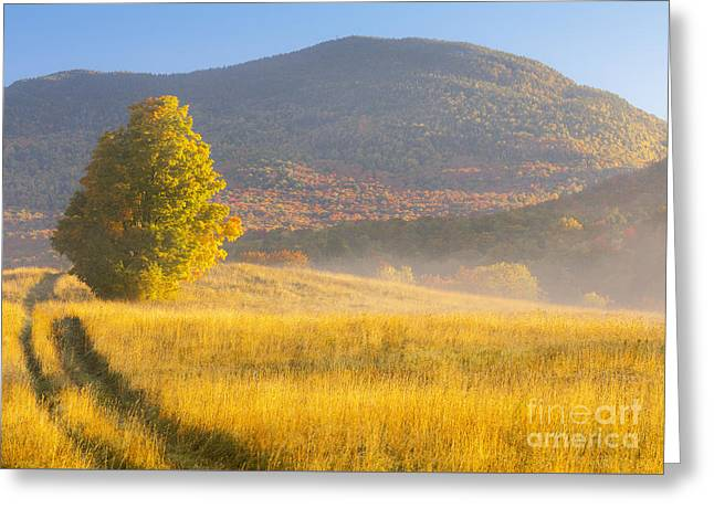 Golden Autumn Morning Greeting Card