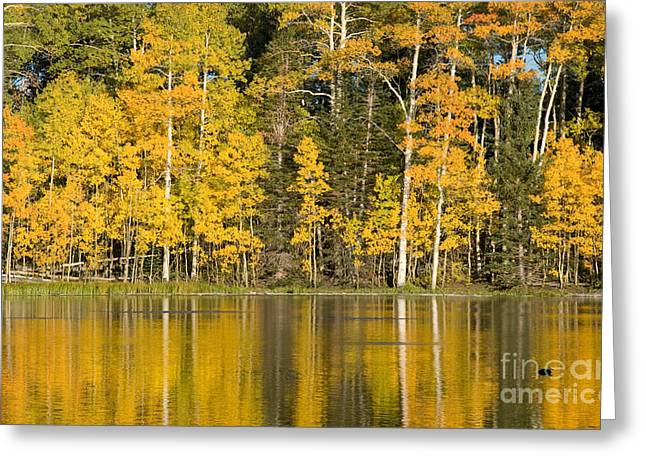 Golden Autumn Pond Greeting Card