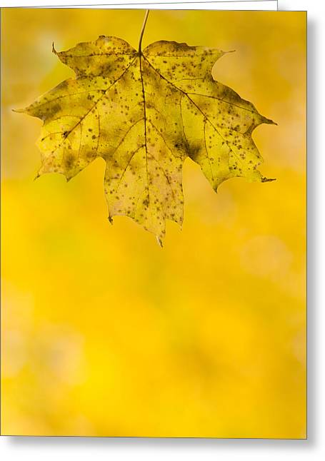 Golden Autumn Greeting Card by Sebastian Musial