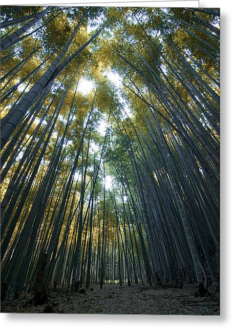 Golden Bamboo Forest Greeting Card by Aaron Bedell