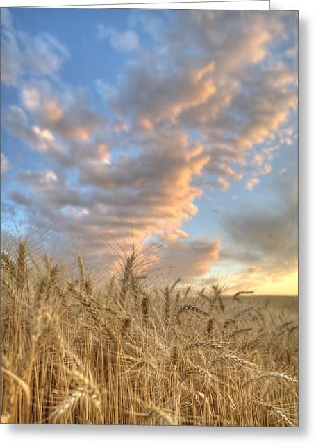 Golden Barley Greeting Card