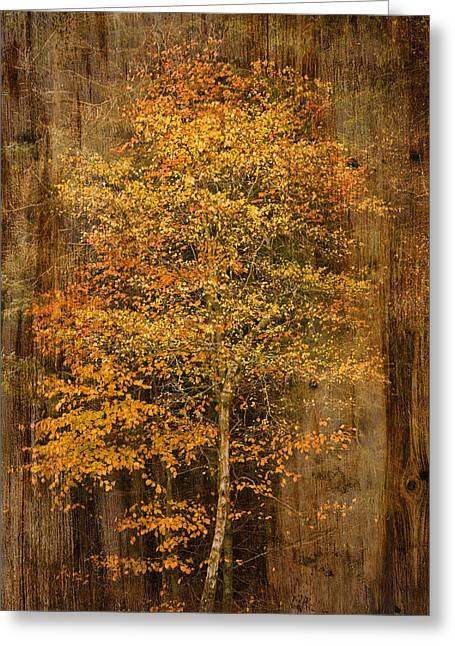 Golden Birch Greeting Card