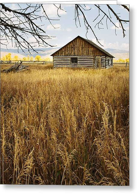 Golden Cabin Greeting Card by Sonya Lang