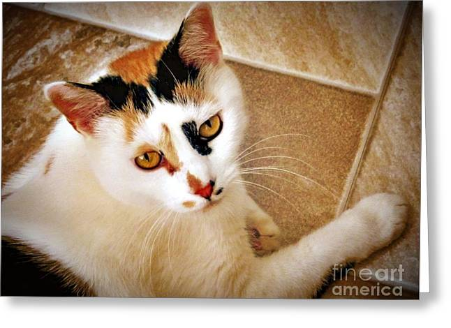 Golden Calico Greeting Card by Phyllis Kaltenbach