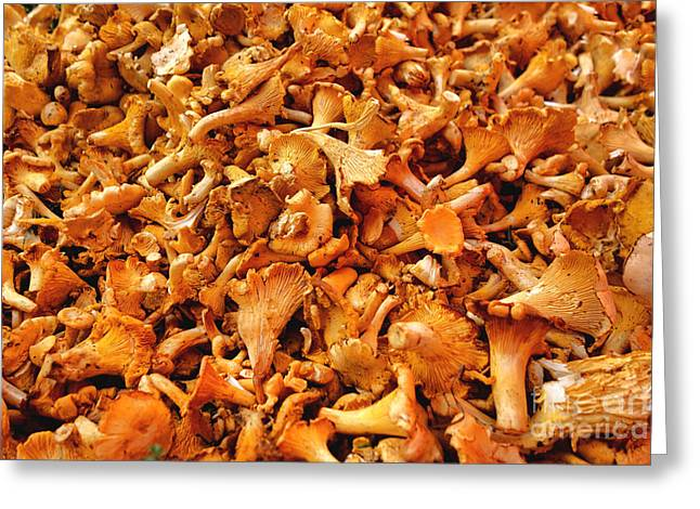 Golden Chanterelles Greeting Card by Olivier Le Queinec