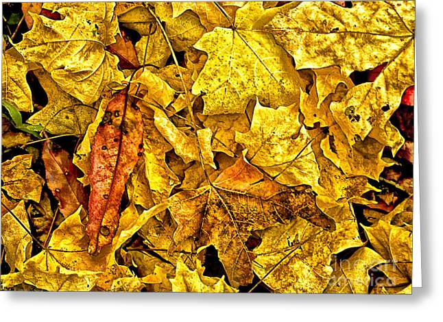 Golden Colors Of Fall Greeting Card