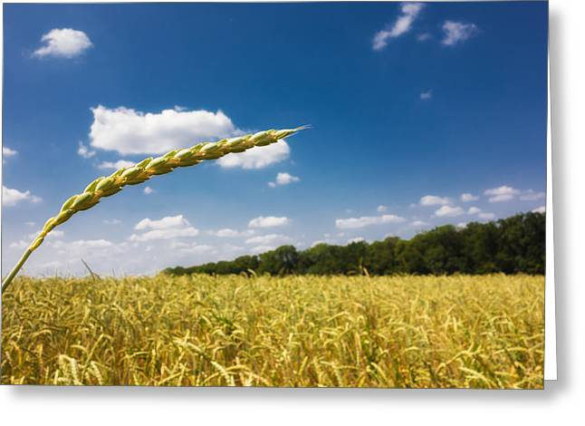 Golden Cornfield And Blue Sky On A Beautiful Sunny Summer Day Greeting Card by Matthias Hauser