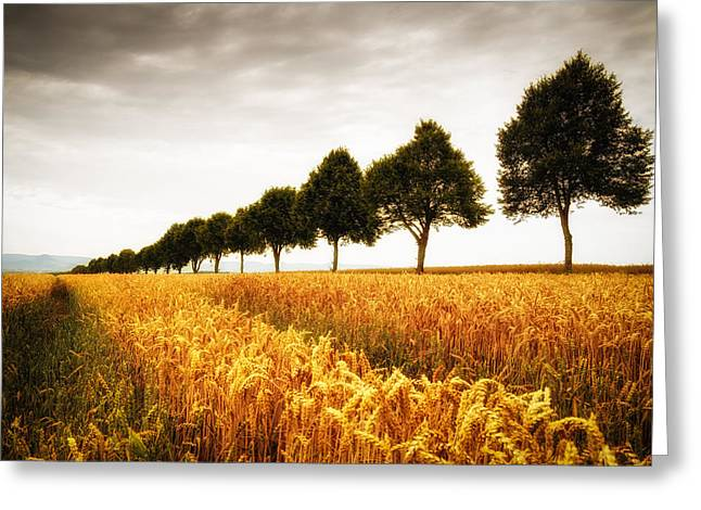 Golden Cornfield And Row Of Trees Greeting Card