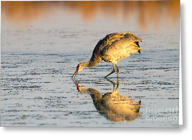 Golden Crane Reflections Greeting Card
