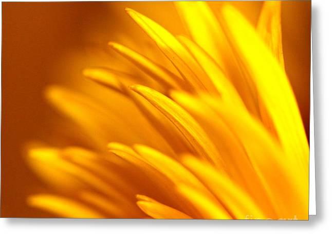 Golden Dahlia Greeting Card