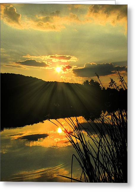 Golden Day Greeting Card by Cindy Haggerty