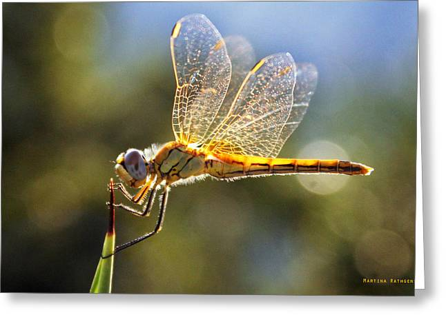 Golden Dragonfly Greeting Card by Martina  Rathgens
