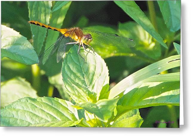 Golden Dragonfly On Mint Greeting Card