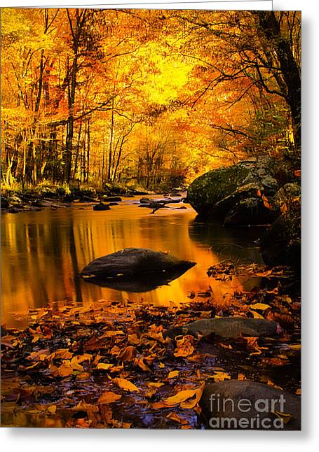 Greeting Card featuring the photograph Golden Dream by Geraldine DeBoer