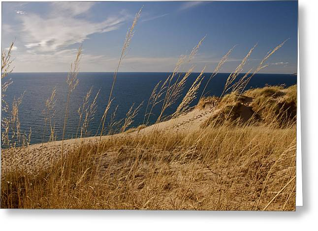 Golden Dune Grass On The Lake Greeting Card