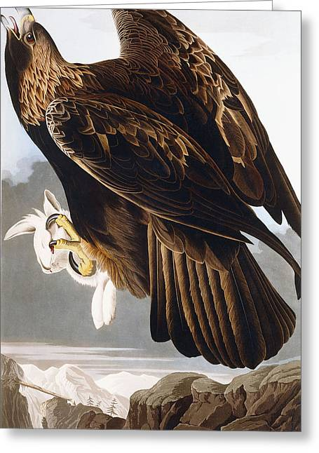 Golden Eagle Greeting Card by John James Audubon