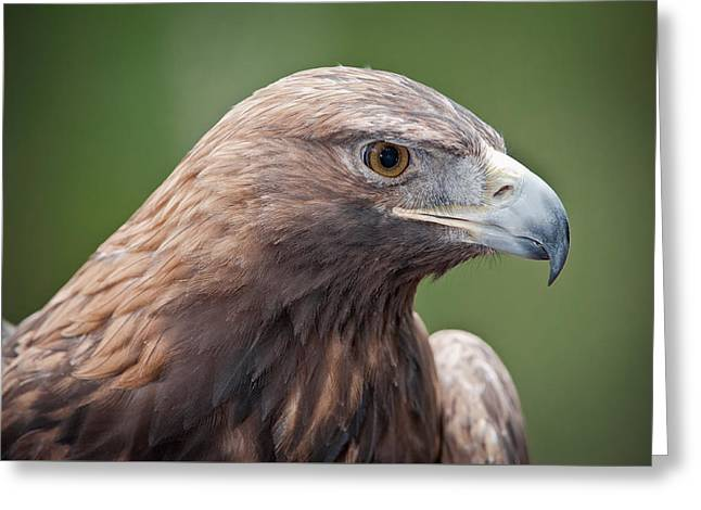 Greeting Card featuring the photograph Golden Eagle by Tyson and Kathy Smith