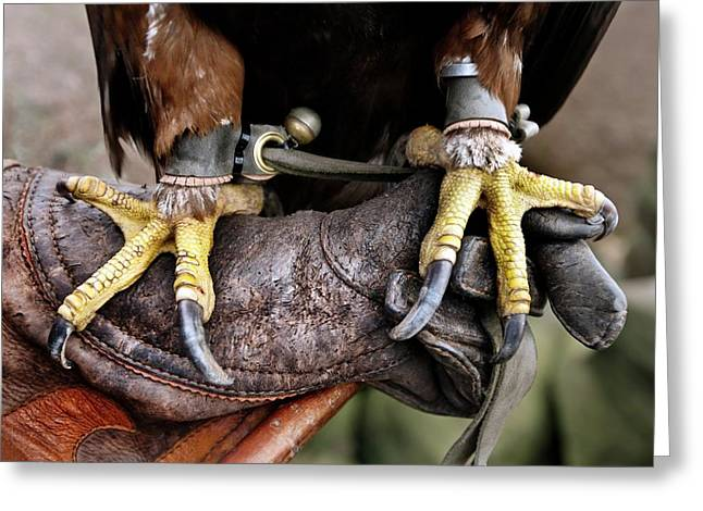 Golden Eagle's Feet Greeting Card