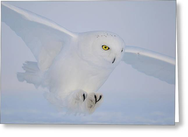 Golden Eyes On The Hunt Greeting Card