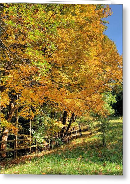 Greeting Card featuring the photograph Golden Fenceline by Gordon Elwell