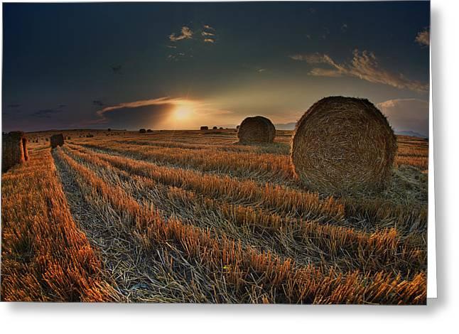 Golden Fields Greeting Card by Nikolay Sirakov