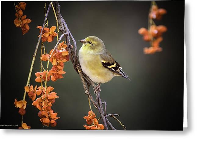 Golden Finch And Mountain Ash Greeting Card by LeeAnn McLaneGoetz McLaneGoetzStudioLLCcom