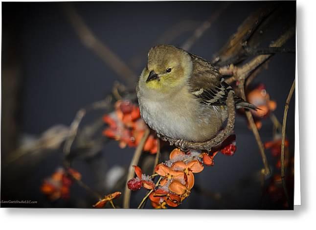 Golden Finch Mountian Ash Greeting Card