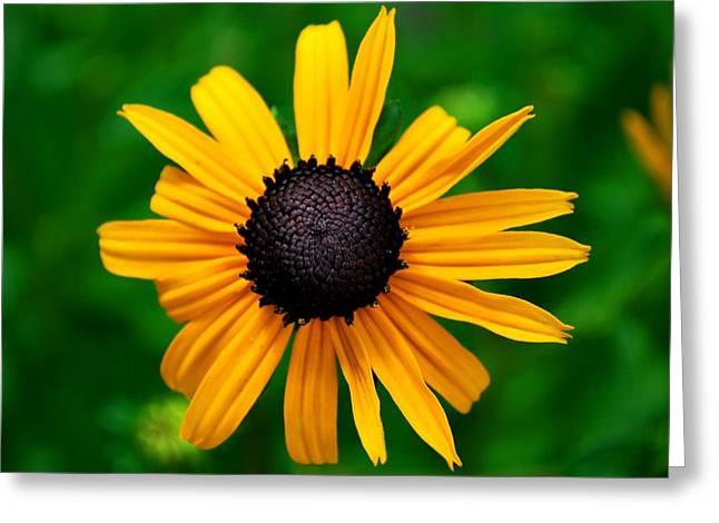 Golden Flower Greeting Card by Matt Harang