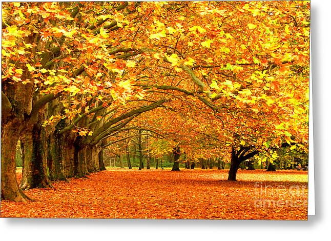 Golden Forest Greeting Card by Boon Mee