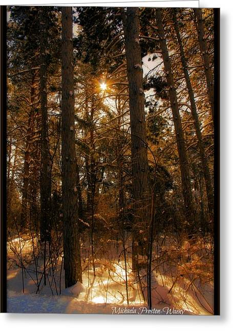 Greeting Card featuring the photograph Golden Forrest by Michaela Preston