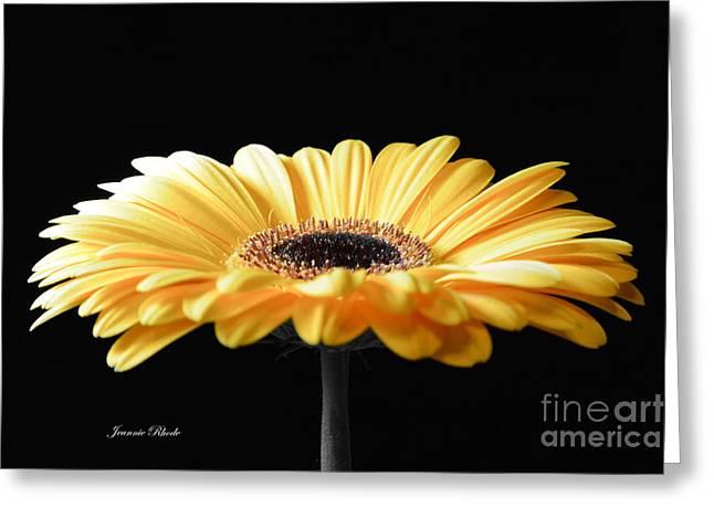 Golden Gerbera Daisy No 2 Greeting Card