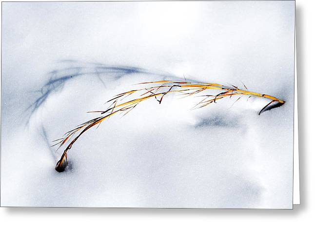 Golden Grass And Shadow In Snow Greeting Card by John Haldane