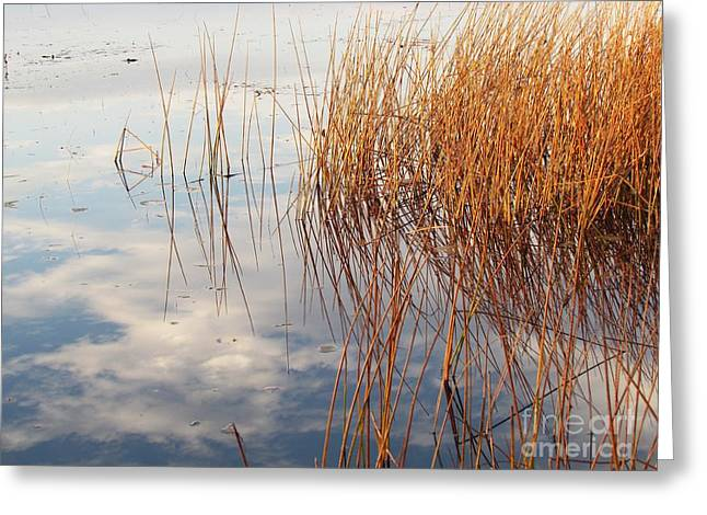 Golden Grasses Greeting Card
