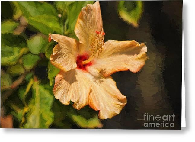Golden Hibiscus Morning Greeting Card by Deborah Benoit