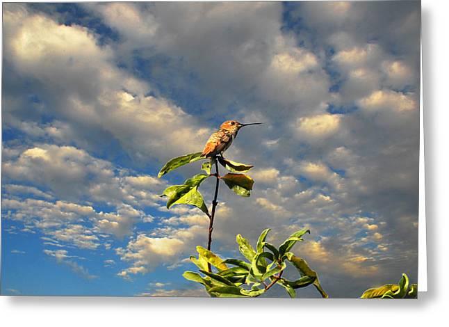 Golden Hour Hummingbird Greeting Card