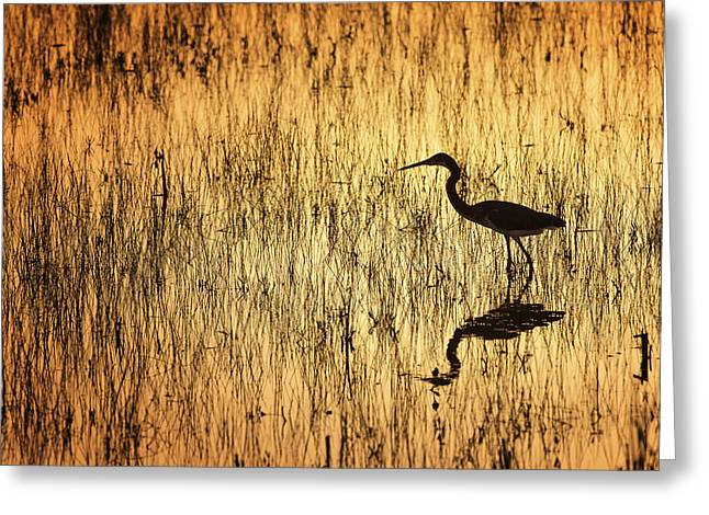 Golden Hour Greeting Card by Mike Lang