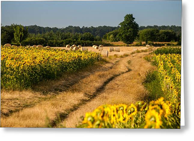 Golden Hour On Country Road Greeting Card by Davorin Mance
