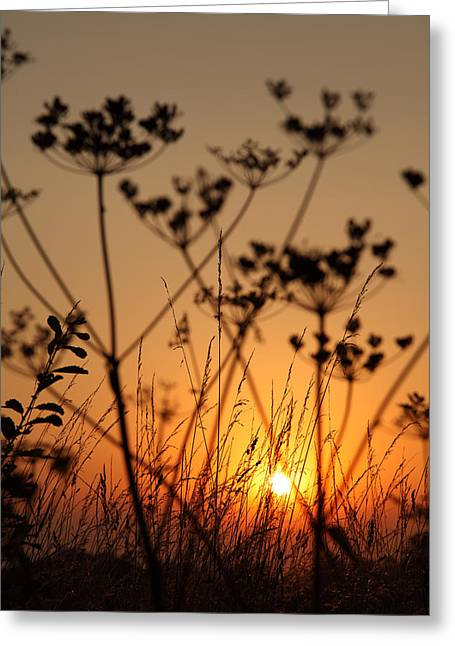 Golden Hour Greeting Card by Paul Lilley