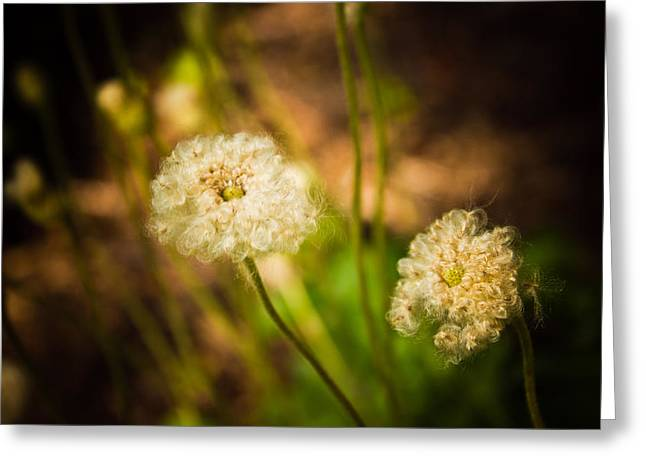 Greeting Card featuring the photograph Golden Hour by Sara Frank
