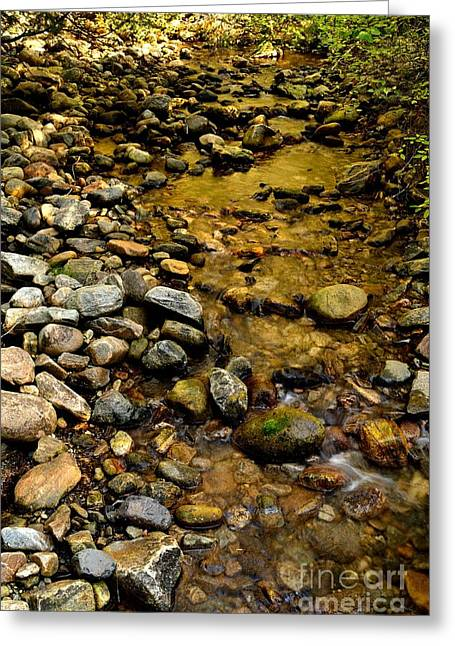 Golden Klo Creek Greeting Card by Phil Dionne