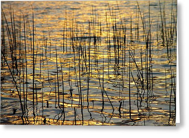 Golden Lake Ripples Greeting Card by James BO  Insogna