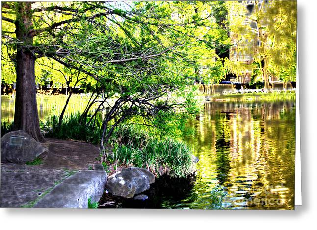 Golden Lake Greeting Card by Terry Wallace