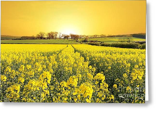 Golden Landscape Greeting Card