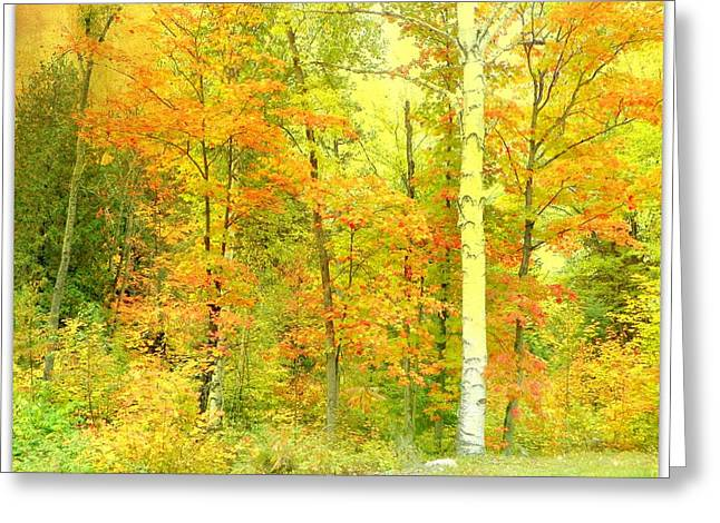 Golden Leaves  Greeting Card by Dianne  Lacourciere