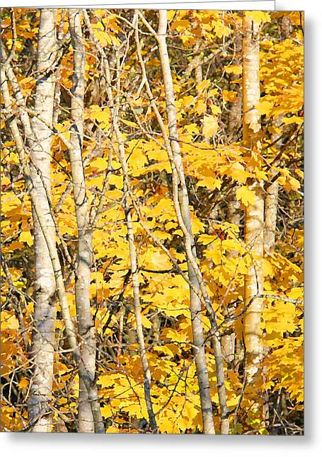 Golden Leaves In Autumn Abstract 2 Greeting Card by Jennie Marie Schell
