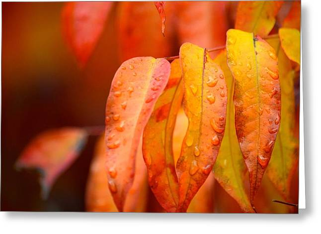 Golden Leaves In The Rain At Stanford Greeting Card