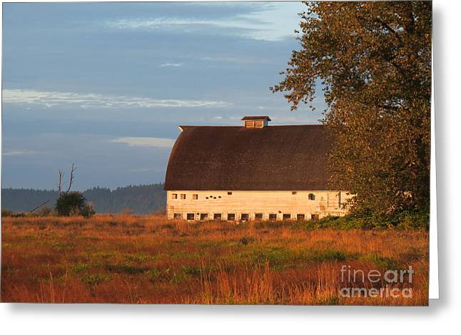 Golden Light At Nisqually Wildlife Refuge Greeting Card