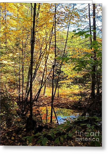 Golden Light Greeting Card by Linda Marcille